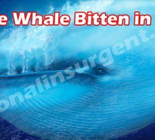 Blue Whale Bitten in Half