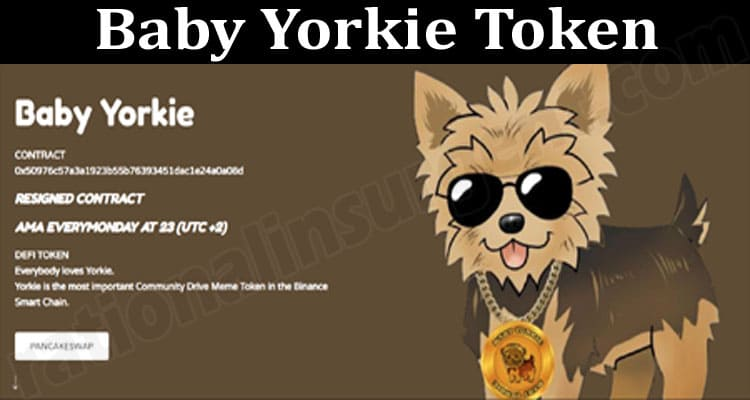 About General Information Baby Yorkie Token