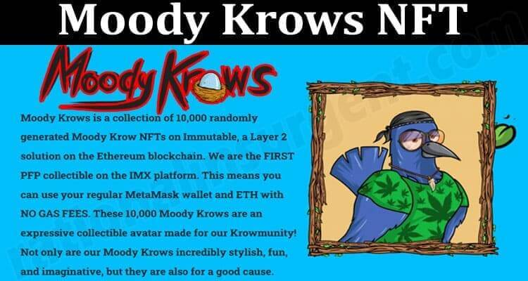 About General Information Moody Krows NFT About General Information Moody Krows NFT