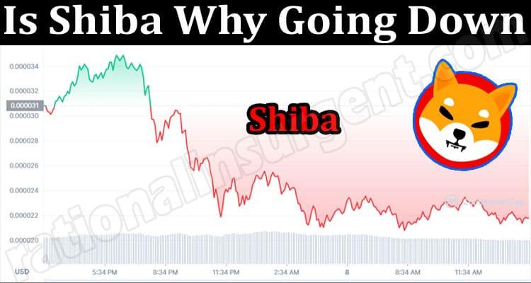 Latest News Shiba Why Going Down